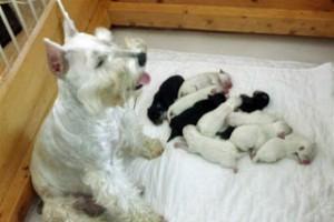 Bianca had ten puppies!