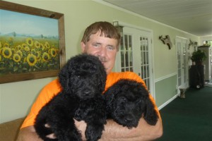 Delilah had her puppies – Giant Schnoodles