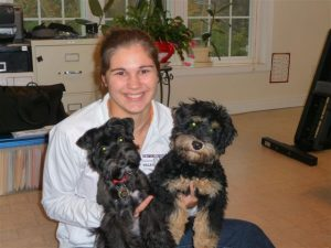 Girl with schnoodle pups