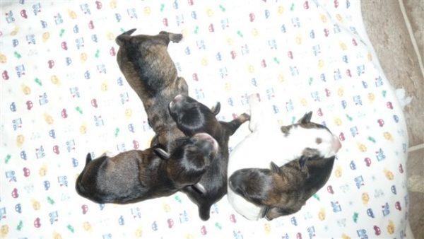 5 pups.jpg (1)