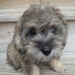 Munson pup Elouise goes home