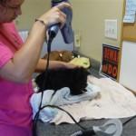 Girlfriend Stephanie helping me bath Rikka's pups for updated photos2