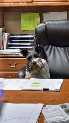 Sophia in charge (1)