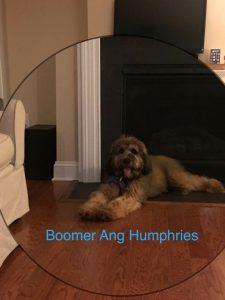 Boomer Humphries Update